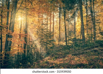 Morning in Wild Old Forest, Autumn season, real sunbeam, vintage style