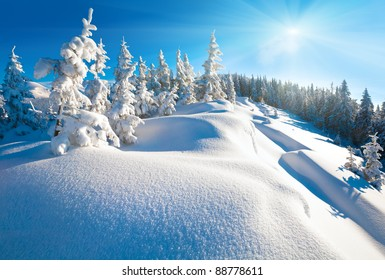 Morning winter calm mountain landscape with beautiful fir trees  on slope (Kukol Mount, Carpathian Mountains, Ukraine). Beautiful natural winter good weather christmas vacation concept.