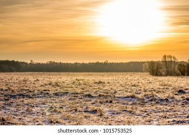 Morning winter field