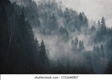 Morning winter forest in Carpathian Mountains