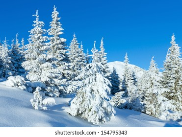 Morning winter mountain landscape with fir trees on slope.
