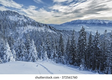 Morning winter scenery with fir trees forest covered by heavy snow in Postavaru mountain, Poiana Brasov resort, Romania.