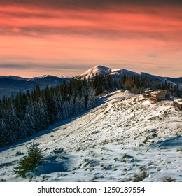 morning winter sunrise landscape in mountains, amazing nature dawn scene,  wonderful frosty weather, meadow and spruce forest on background Petros mountain, Kukul range, view on Chornogora, Ukraine