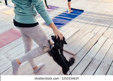 ?oncept of morning yoga with your pet. Little dog is happy to play sports together with the owner, friendship. Yogi girl doing morning exercises on wooden terrace outdoor with her puppy
