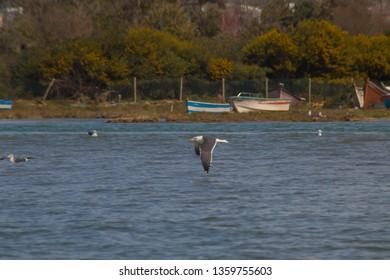 Moroccan birds in lagune