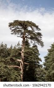 morocco road way tree