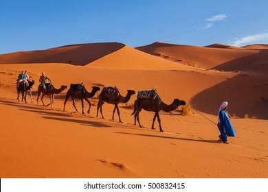 Morocco - Sept 27, 2011: Camel caravan in the Sahara