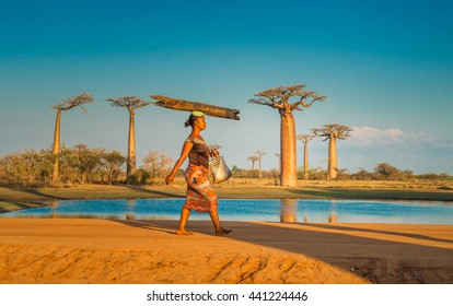 MORONDAVA, MADAGASCAR - September, 15, 2014: Woman carrying log on the head, Avenue of the Baobabs, Madagascar