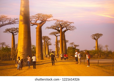 MORONDAVA-MADAGASCAR-OCTOBER-7-2017:Baobab Avenue with the tourist looking Sunset scene with Baobab tree Avenue in Morondava ,Madagascar