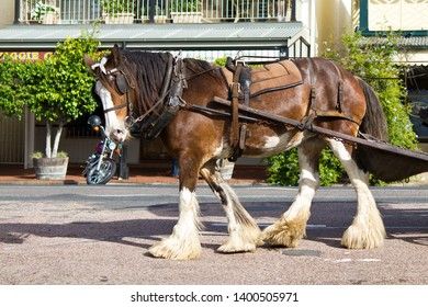 Morpeth, New South Wales / Australia - Weekend horse and cart rides with a Clydesdale horse.  Morpeth, The Hunter Valley, Newcastle Region