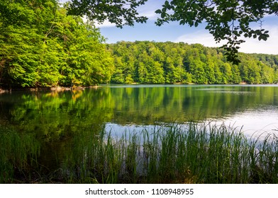 Morske Oko lake among primeval beech forest with grassy shore. beautiful Vihorlat landscape of Slovakia in summer. clean environment concept.