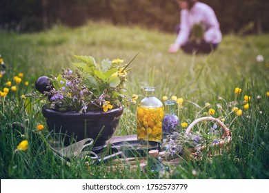 Mortar of medicinal herbs, old book, infusion bottle, scissors, basket and magnifying glass on a grass on meadow. Woman gathering healing plants outdoors on background..