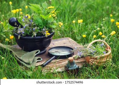 Mortar of medicinal herbs, old book, infusion bottle, basket and magnifying glass on a grass on meadow outdoors.