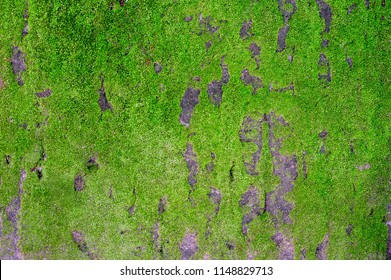 Mos textures background. Green mos on Stone background. Stone with Green mos. Green mos background.
