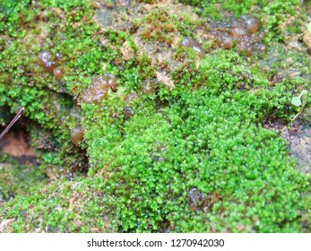 Mos textures background. Green mos on Stone background