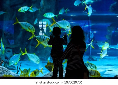 Moscow - April 2, 2018: Young woman with child watch a fish in aquarium. Silhouettes of people visiting the large aquarium. Family looks in beautiful blue aquarium.