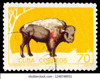 MOSCOW, December 1, 2018:  A stamp printed in Cuba shows a bison, circa 1970