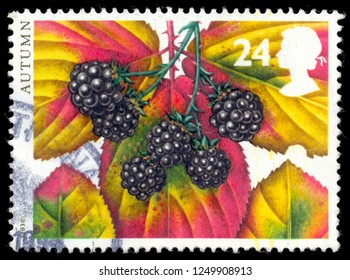 MOSCOW, December 1, 2018: a stamp printed in the Great Britain shows Blackberries, Autumn fruits, circa 1993