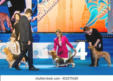 Moscow - JUNE 23: Unidentified participants , WORLD DOG SHOW 2016 MOSCOW. The exhibition was attended by more than 25,000 dogs of 300 breeds from 41 countries . June 23, 2016 in Moscow, Russia