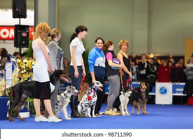 MOSCOW - MARCH 26: Unidentified participants of dogshow EURASIA 2011, on March 26, 2011 in Moscow, Russia. More than 14,000 dogs from around world participated in event.