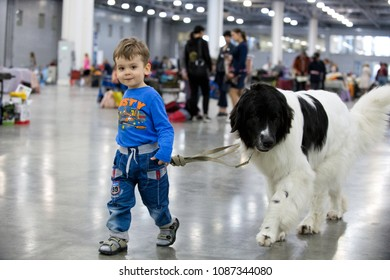 """MOSCOW - MAY 06, 2018: International dog show """"EURASIA"""" in Crocus Expo.  Little boy with his Landseer  dog breed."""