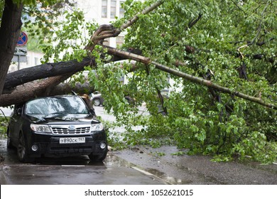 MOSCOW, RUSSIA - 26 June, 2017: Hurricane in Moscow knocked down trees. The tree fell on an expensive car.