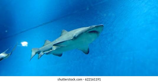 MOSCOW, RUSSIA - APRIL, 13 2017: Wild fish in a huge beautiful aquarium, VDNKh Moskvarium pavillion - the biggest in Europe sea aquarium and entertainment center, Moscow, Russia