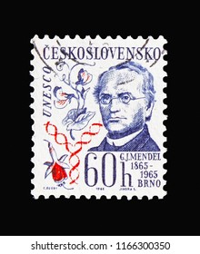 MOSCOW, RUSSIA - AUGUST 18, 2018: A stamp printed in Czechoslovakia shows Johann Gregor Mendel (1865-1965), Cultural anniversaries and events serie, circa 1965