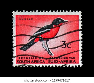 MOSCOW, RUSSIA - AUGUST 18, 2018: A stamp printed in South Africa shows Crimson-breasted Shrike (Laniarius atrococcineus), Definitive Issue - Decimal Issue serie, circa 1964