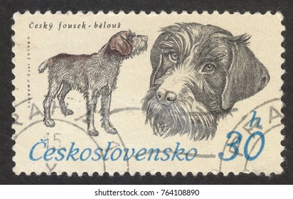 """MOSCOW RUSSIA - CIRCA NOVEMBER 2017: a post stamp printed in CZECHOSLOVAKIA shows  Cesky Fousek (Canis lupus familiaris), the series """"The hounds"""", circa 1973"""