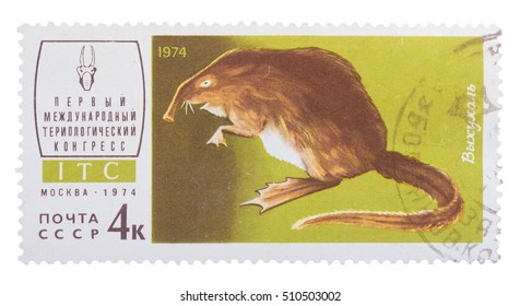 """MOSCOW, RUSSIA - DECEMBER, 2015: a post stamp printed in the USSR shows an animal with the inscription """"Desmana moschata"""", the series """"The 1st Theriological Congress"""""""