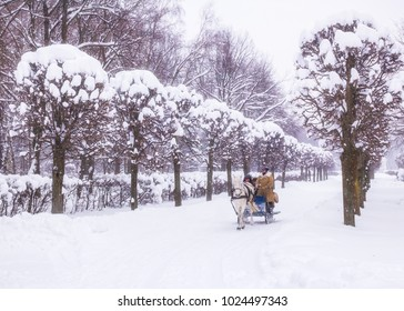 Moscow, Russia - February 11, 2018: Sledding, traditional old winter Russian fun. White horse, coachman, passengers, snow-covered trees in a winter park, snowfall. homestead Kuskovo. Soft focus.