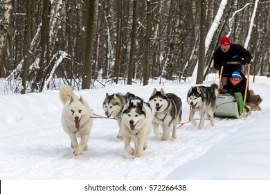 "Moscow, Russia - January 27: children take part in racing sled dogs ""along the way with the huskies"". January 27, 2017, in Moscow, Sokolniki Park."