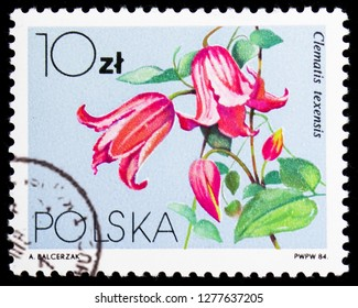 MOSCOW, RUSSIA - JANUARY 4, 2019: A stamp printed in Poland shows Clematis texensis, Flowers Local - Clematis serie, circa 1984