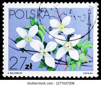 MOSCOW, RUSSIA - JANUARY 4, 2019: A stamp printed in Poland shows Clematis montana, Flowers Local - Clematis serie, circa 1984