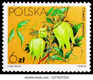 MOSCOW, RUSSIA - JANUARY 4, 2019: A stamp printed in Poland shows Clematis tangutica, Flowers Local - Clematis serie, circa 1984