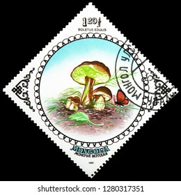 MOSCOW, RUSSIA - JANUARY 4, 2019: A stamp printed in Mongolia shows Cep (Boletus edulis), Mushrooms serie, circa 1985