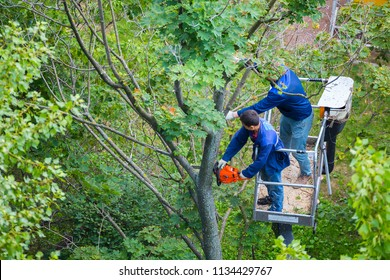 MOSCOW, RUSSIA - JULY 13, 2018: Employees of the public service sawing old trees