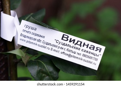 "Moscow, Russia - July, 21, 2019: Label a close up on Pear Sapling of a grade ""Visible"" from nursery ""Suzdal saplings"" the Vladimir region, the Suzdal district, the village of Kistysh"