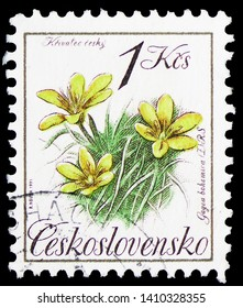 MOSCOW, RUSSIA - MARCH 30, 2019: A stamp printed in Czechoslovakia shows Gagea bohemica, Nature Protection serie, circa 1991