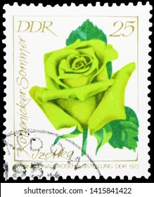 MOSCOW, RUSSIA - MARCH 30, 2019: A stamp printed in Germany, Democratic Republic, shows Izetka Köpenicker Sommer, Rose Exhibition serie, circa 1972
