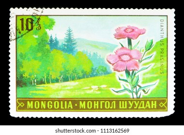 MOSCOW, RUSSIA - MAY 15, 2018: A stamp printed in Mongolia shows Dianthus prasinus, Flora serie, circa 1969