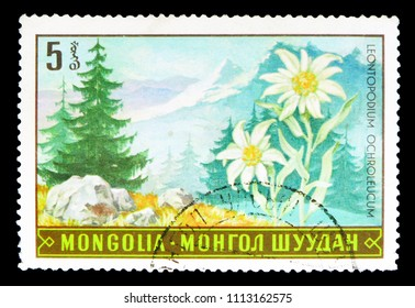 MOSCOW, RUSSIA - MAY 15, 2018: A stamp printed in Mongolia shows Leontopodium ochroleucum, Flora serie, circa 1969