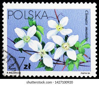 MOSCOW, RUSSIA - MAY 25, 2019: Postage stamp printed in Poland shows Clematis montana, Flowers Local - Clematis serie, circa 1984