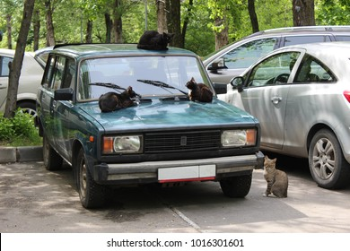 Moscow, Russia - May 29, 2017 - Cat's family sitting on old car