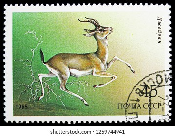 MOSCOW, RUSSIA - NOVEMBER 10, 2018: A stamp printed in USSR (Russia) shows Goitered Gazelle (Gazella subgutturosa), Protected Animals serie, circa 1985