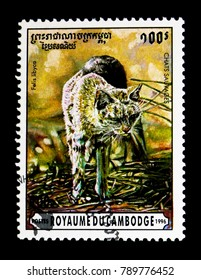 MOSCOW, RUSSIA - NOVEMBER 24, 2017: A stamp printed in Cambodia shows African Wildcat (Felis silvestris lybica), Wild cats serie, circa 1996