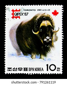 MOSCOW, RUSSIA - NOVEMBER 24, 2017: A stamp printed in Democratic People's republic of Korea shows Muskox (Ovibos moschatus), International Stamp Exhibition CAPEX '87, Toronto serie, circa 1987