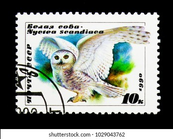MOSCOW, RUSSIA - NOVEMBER 26, 2017: A stamp printed in USSR (Russia) shows Snowy Owl (Bubo scandiacus), serie, circa 1990