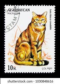 MOSCOW, RUSSIA - NOVEMBER 26, 2017: A stamp printed in Azerbaijan shows African Wildcat (Felis silvestris lybica), serie, circa 1994